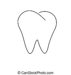 リボン, 歯, 形態
