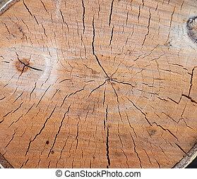 リング, 手ざわり, シラカバ, 割れた, 乾きなさい, 木, birch.