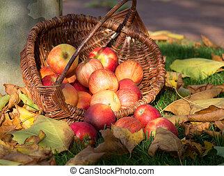 リンゴが選ぶ