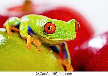 リンゴの木, カエル, 緑は eyed, 赤