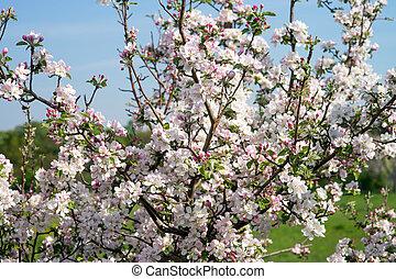 リンゴの木, 花
