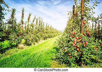リンゴ果樹園