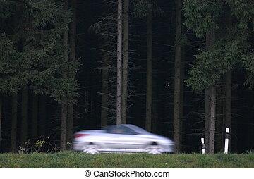 ルート, 森林