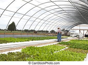 レタス, aquaponics, 温室, 成長する