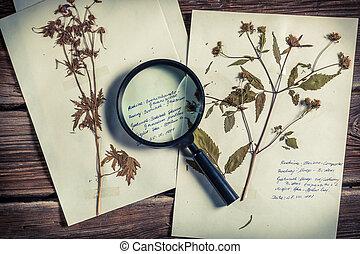 レッスン, cataloging, 生物学, 植物