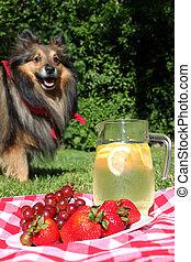 レモネード, ピクニック, 犬