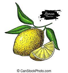 レモン, illustration., ベクトル, フルーツ, drawing., 芸術的, 夏