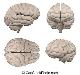 レンダリング, 白, 3d, 隔離された, 脳