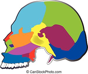 ロゴ, 頭骨, 人間, 骨