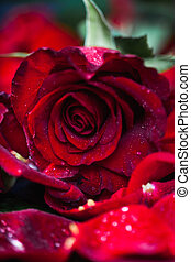 ローズ 花弁, クローズアップ, 低いキー, 黒い赤