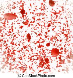 ローズ 花弁, 結婚, 背景, 落ちる, 赤