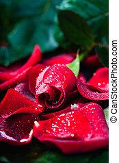 ローズ 花弁, 黒, 低いキー, 赤