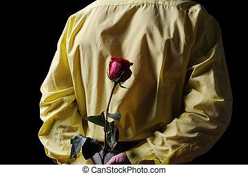 ワイシャツ, バラ, 黄色, 保有物, 赤, 人
