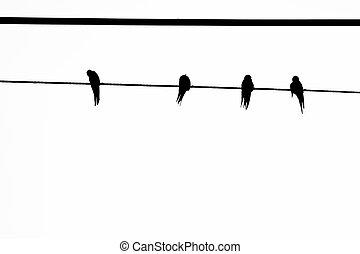 ワイヤー, 鳥
