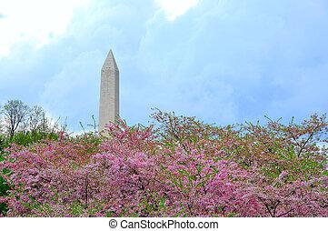 ワシントン州 記念碑, 中に, さくらんぼ, 花
