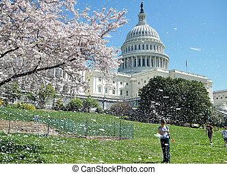 ワシントン, 桜, そして, 国会議事堂, 2010