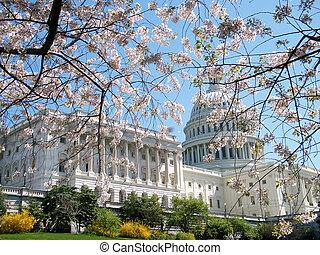ワシントン, 桜, 近くに, 国会議事堂の 建物, 2010