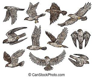 ワシ, 鳥, ハゲタカ, 隔離された, タカ, タカ