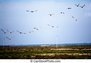一団, 空, 鳥