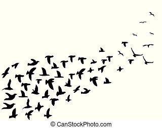 一団, 飛行, 黒, 鳥, 背景
