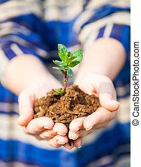 一, 植物, 在, 女性, hands., 生態學, 概念