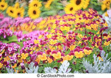 三色旗, パンジー, 花, 植物, 自然, 背中, 地面