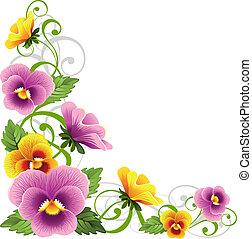 三色紫罗兰