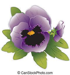 三色紫羅蘭, 花, 淡紫色
