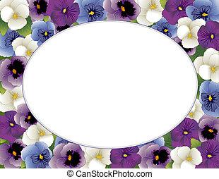 三色紫羅蘭, 花, 畫框架, 橢圓形