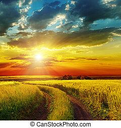 上に, フィールド, 緑, 田園, 日没, 道