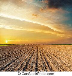 上に, フィールド, 黒, オレンジ, 日没, 農業