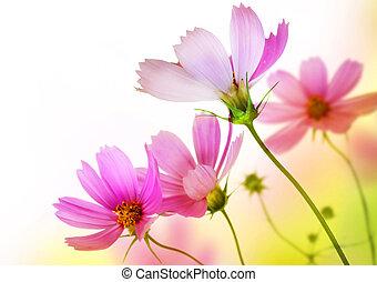 上に, 花, 花, border., デザイン, 美しい, 白