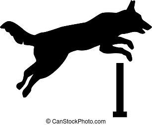 上に, 跳躍, ハードル, 犬