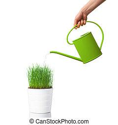 上水, 綠色的草, 由于, a, 噴壺, 被隔离, 在懷特上