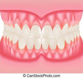 上部, より低い, illustration., 一かじり, 隔離された, ゴム, バックグラウンド。, ベクトル, あご, 白, 総入れ歯, 歯, 閉塞, dentition