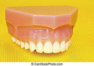 上面, 牙齒