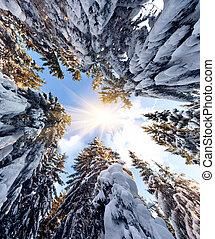 ∥, 上, の, 雪で覆われている, モミツリー, 上に, ∥, 背景, の, 青い空