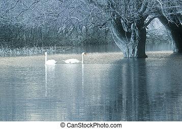上, 白鳥, 木, 下に