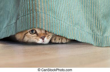 下に, ねこ, 隠された, 面白い, カーテン