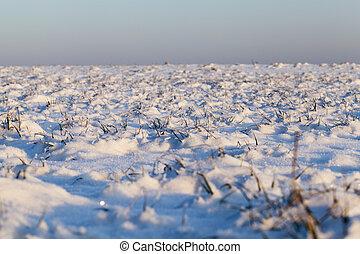 下に, 雪, 草