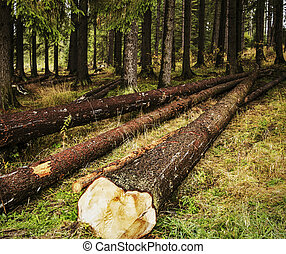 下方に, 切口, 森林, 木