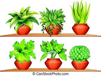 不同, 類型, ......的, 植物, 在, 罐