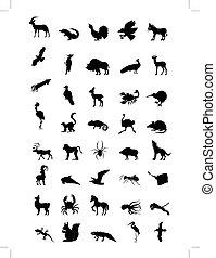 世界, 動物
