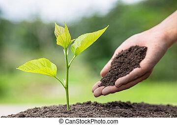 世界, 減らしなさい, 実生植物, 地面, 世界的である, クローズアップ, 環境, 暖まること, 男性, 手, 木を植える, 考え, 木。, day.