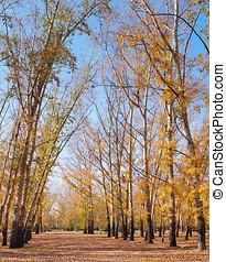 中に, 秋, 公園