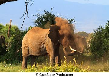 中に, a, ほこりまみれである, cloud., アフリカ, elephants., kenya, アフリカ