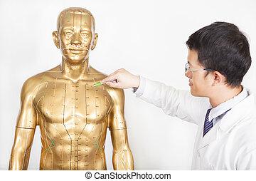 中国語, 医者, acupoint, 人間, 薬, モデル, 教える