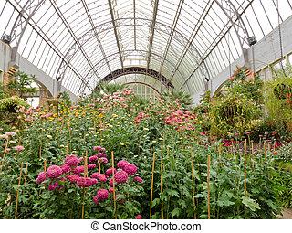 中心, ガラス, 温室, 成長する, 花, 庭