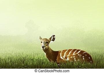 中, 鹿, 見なさい, 女性, ジャングル
