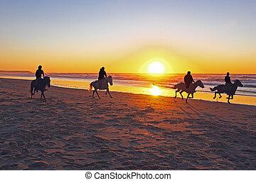 乗馬, 馬, 浜, 日没